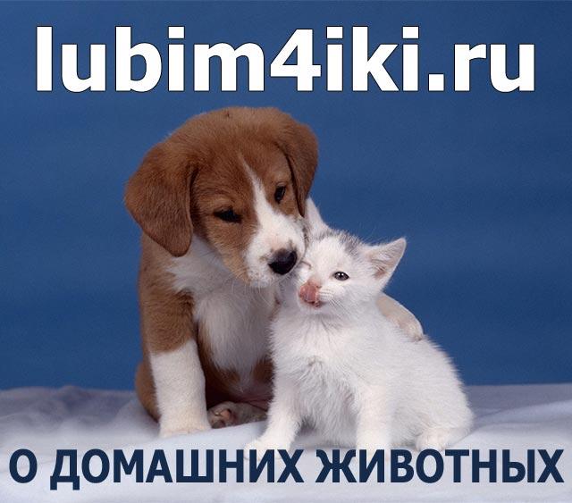 Домашние животные, картинки и фото домашних животных, содержание домашних животных, уход за ними, законы и правила содержания домашних животных