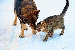 Собака и кошка зимой