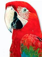 Пернатые друзья - птицы
