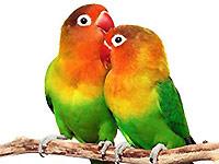 lovebird1.jpg