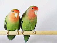 lovebird2.jpg