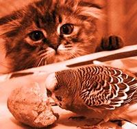Кот охотится за попугаем