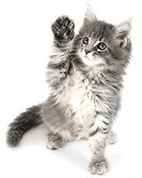 Котята, коты и кошки