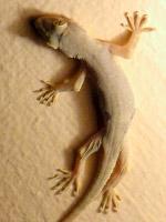 Амфибии, рептилии и экзотические животные