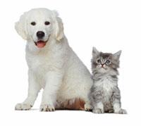 Домашние животные миниатюрных пород
