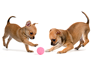 dog_games.jpg