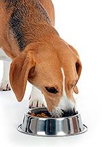 Собака кушает из миски