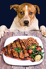 Собака за обеденным столом
