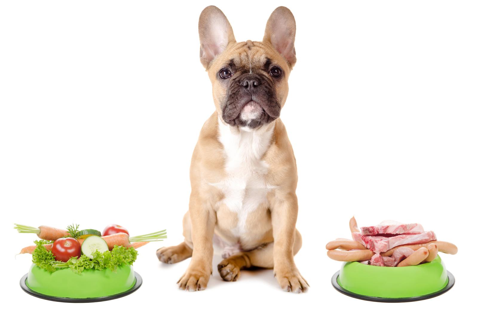 Вредная для собаки еда