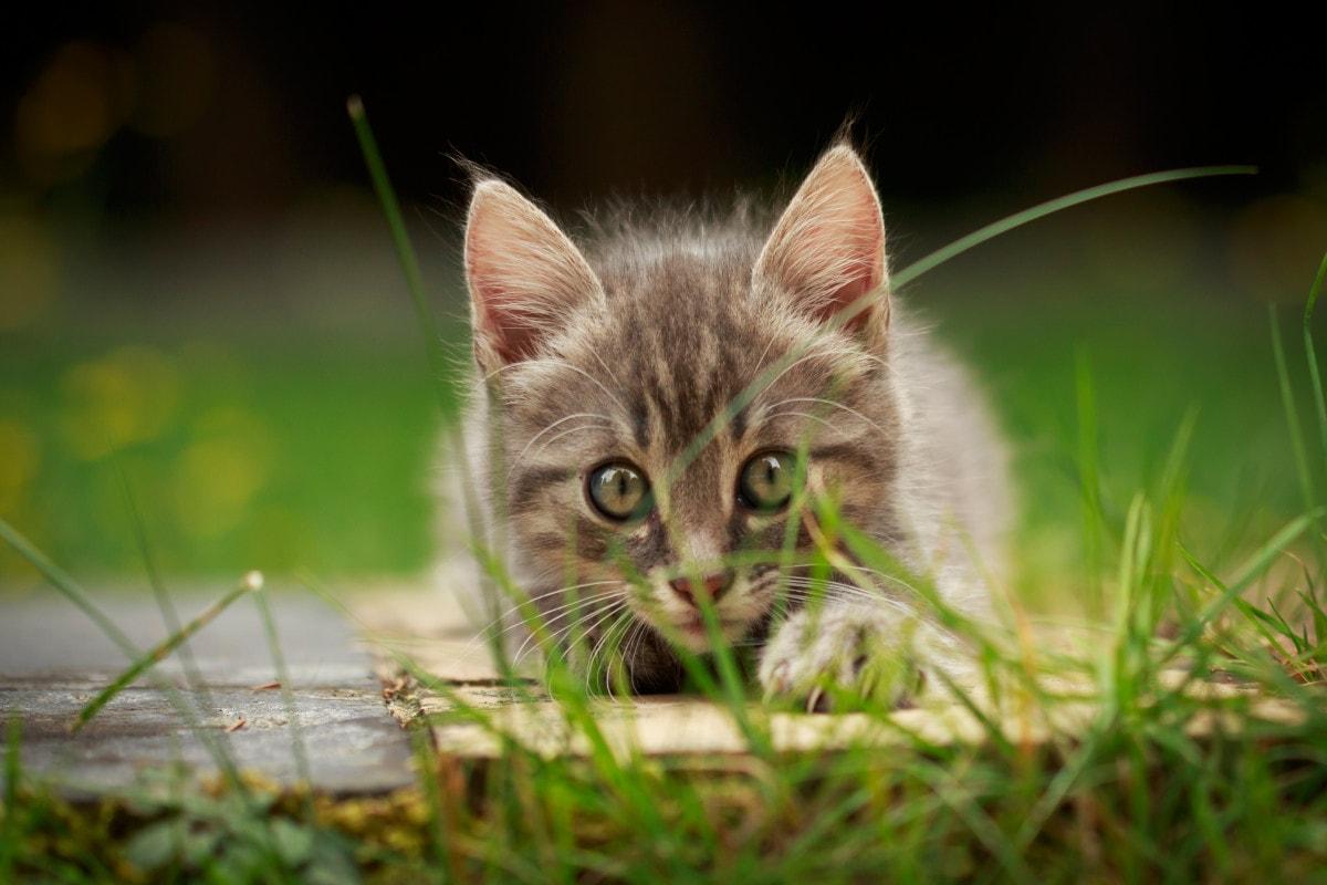 Возвращение котят в город