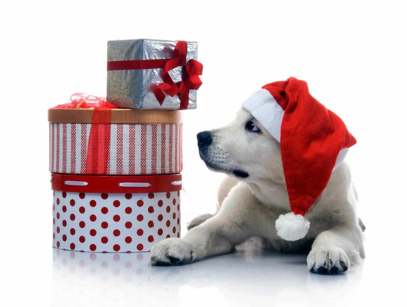 Новогодние подарки для любимчика