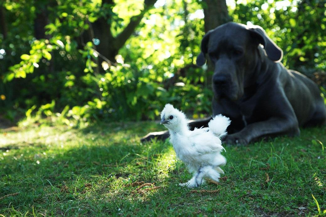 Рацион собаки