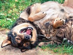 Гормональные всплески активности у домашних животных