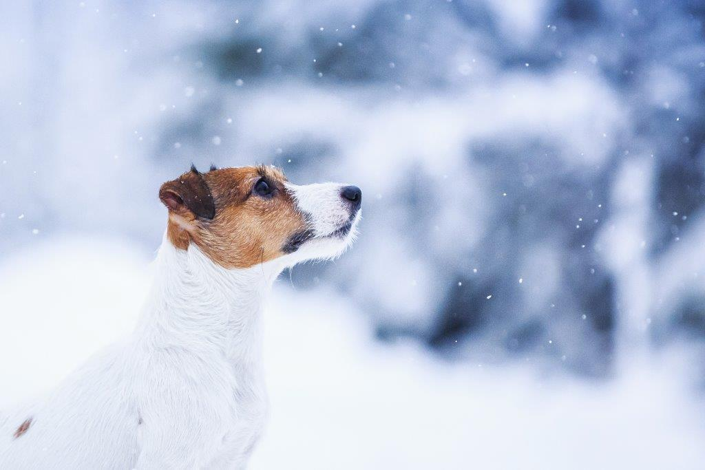 Зимний рацион собак