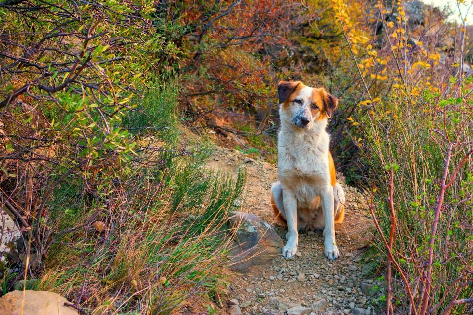Сердечно-сосудистые заболевания собак