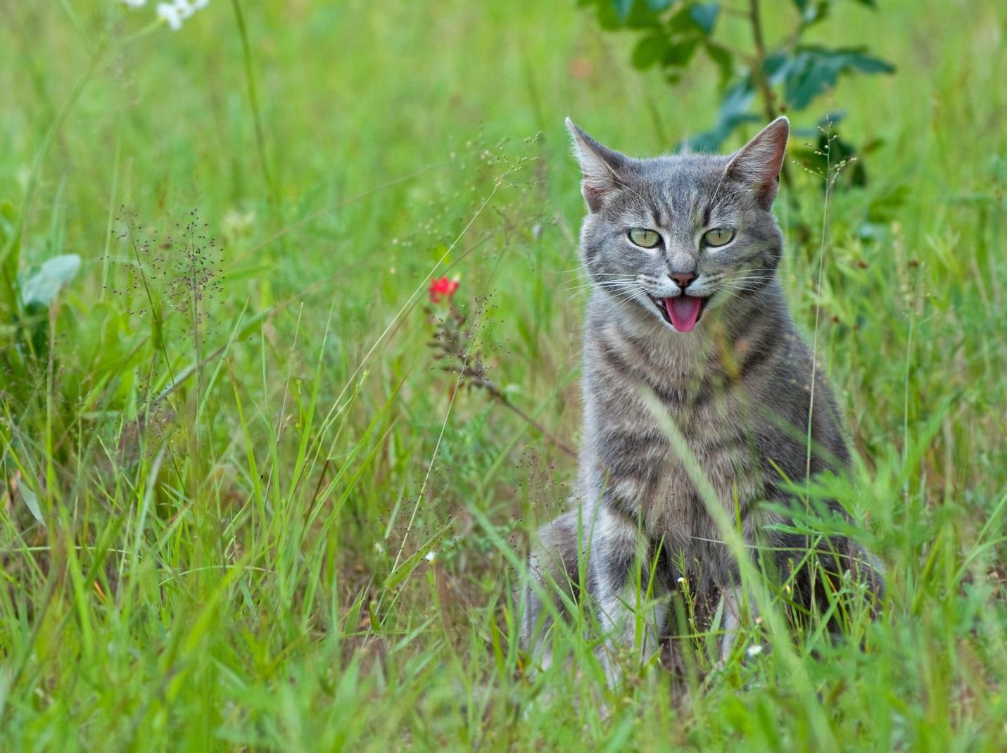 Летние опасности для котов