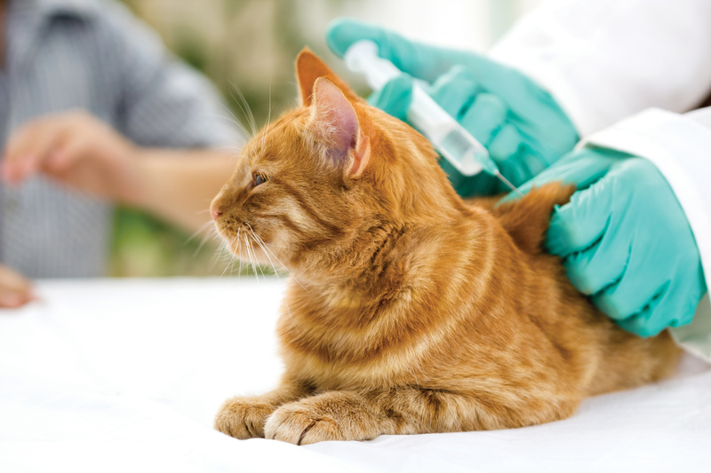 Подготовка кошки к вакцинации