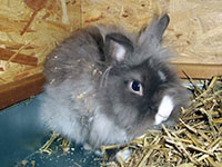 Как правильно ухаживать за кроликом