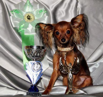 Той-терьер Ерошка с трофеями