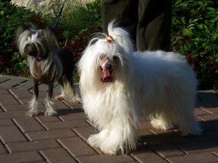 Габриэлла и Гретта на прогулке
