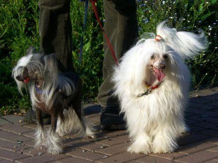 Две сестры - Габриэлла и Гретта