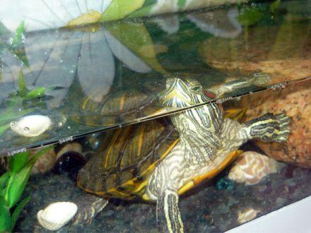 Глаша в аквариуме