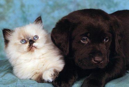 Котенок со щенком