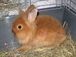 Кролик Бонни, 4 месяца